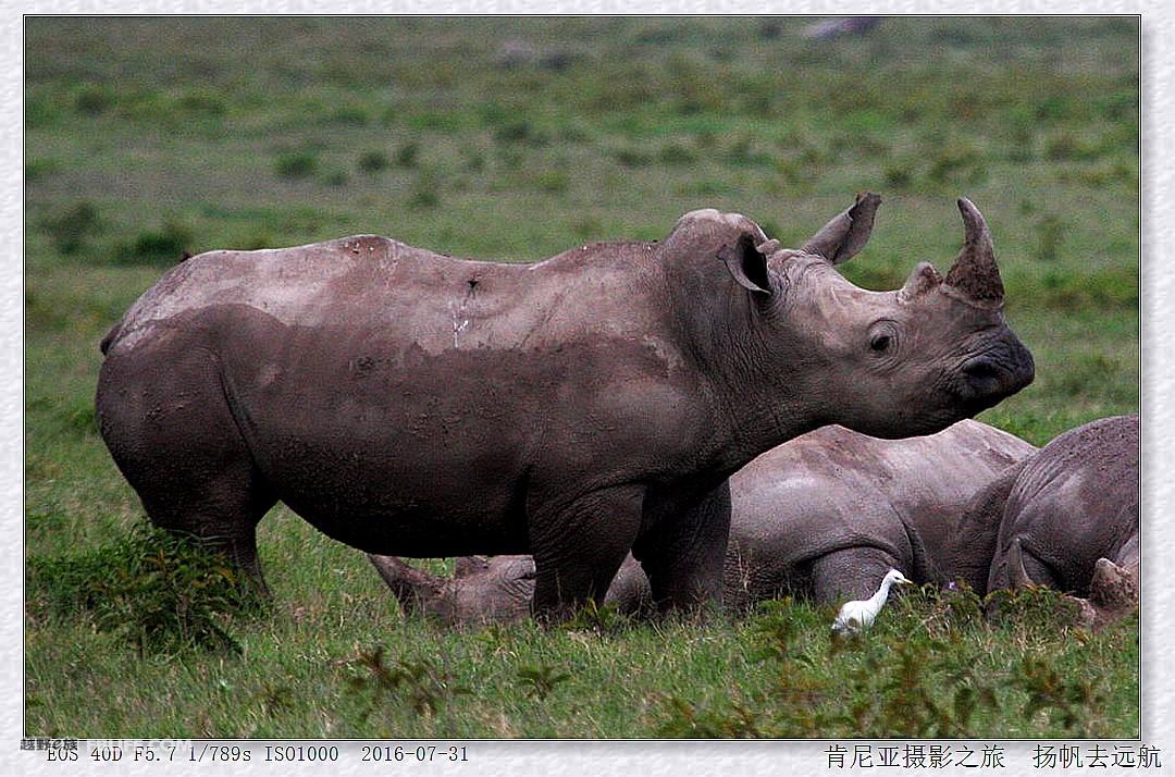 壁纸 犀牛 野生动物 1080_714